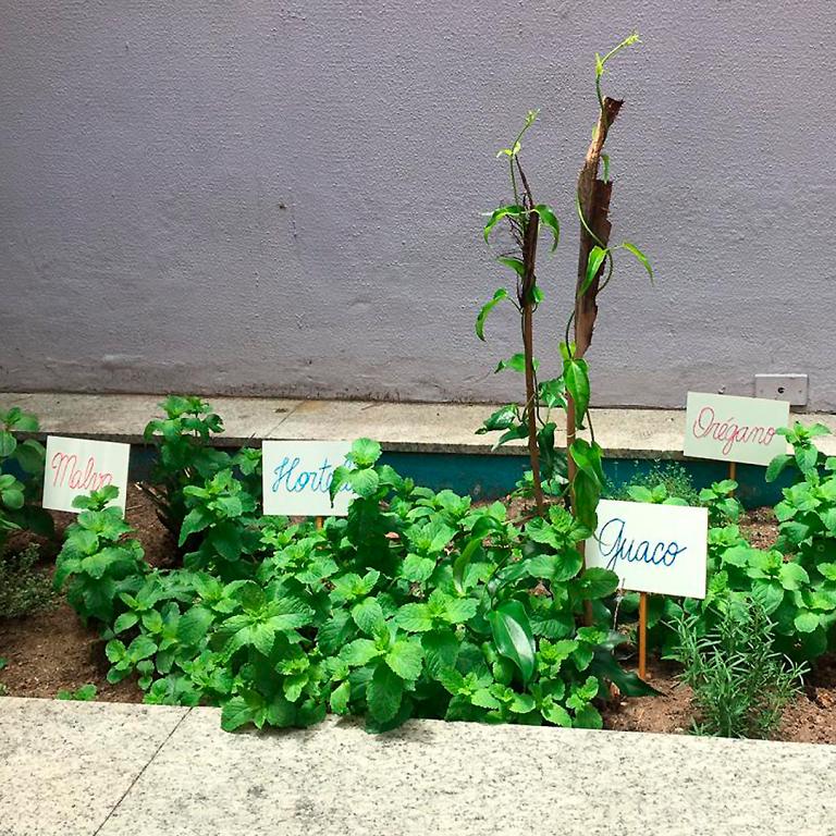 Horta criada por alunos mostra evolução em 2020